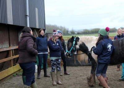 Equine-therapy-2