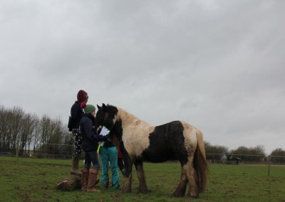 equine-therapy-3
