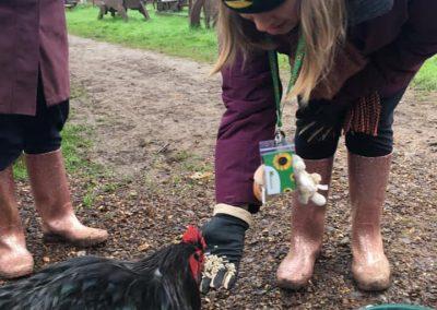 My Day_chickens
