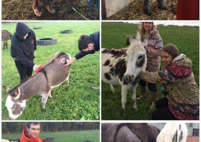 My Day_donkeys