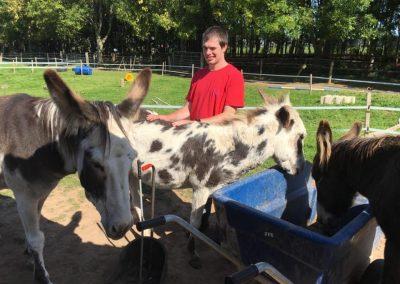 My Day_donkeys2